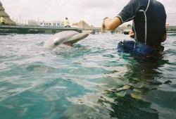 Cozumel Dolphin Excursion Encounter 2.jpg