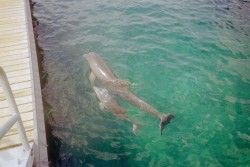 Cozumel Dolphin Excursion Encounter Adult and Baby Dolphin.jpg