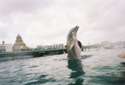 Cozumel Dolphin Excursion Encounter Dolpin Dances.jpg