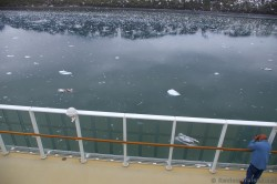 Chunks of ice in Glacier Bay as viewed from NCL Pearl cruise ship.jpg
