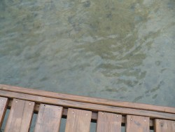 A view of the water from the pier
