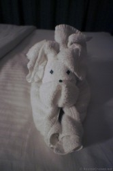 Puppy dog towel animal from Norwegian Getaway.jpg