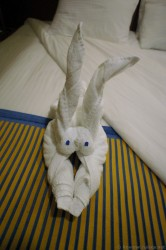 Towel Animal with long animal ears from Carnival Breeze.jpg