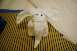 Elephant towel animal with blue eyes from Carnival Breeze.jpg