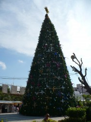 Cozumel Giant Christmas Tree