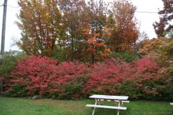 Red + orange leaves of maple trees in Bar Harbor Maine.jpg
