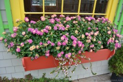 Pink flowers in red flower window planter in Bar Harbor Maine.jpg