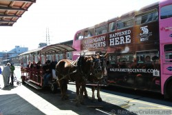 Horse carriage next to Big Pink Gray Line Hop on Hop Off Bus in Halifax.jpg