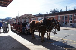 Horse drawn carriage tour in Halifax in front of seaport.jpg