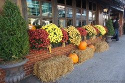Colorful flowers and pumpkins outside a shop in downtown Halifax.jpg