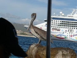 The Heron and the Norwegian Star Cruise Ship in Cabo.JPG