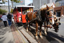 Horse-drawn carriage tour on Water St Saint John.jpg