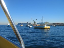Fishing vessels in the waters of Catalina island
