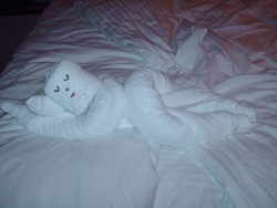 Towel Animals Pictures & Photos on Cruises