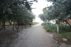 Walkway to beach near Lauderdale Beachside Hotel.jpg