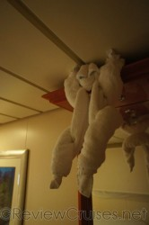 Hanging Monkey towel animal in Norwegian Dawn stateroom.jpg