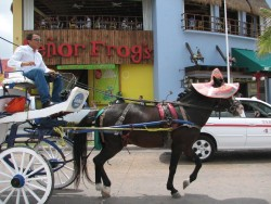 Cozumel Carriage in front of Senor Frog's.jpg