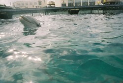 Cozumel Dolphin Excursion Encounter.jpg